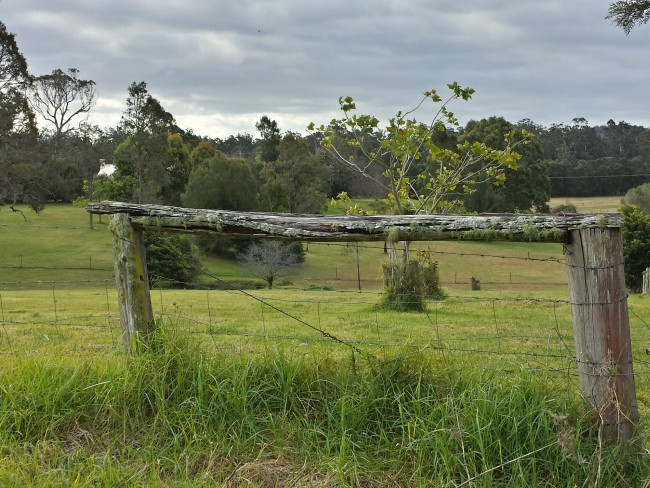 Photo tank from Yarragee Rd, Moruya.